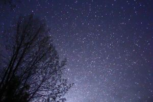 Night_Sky_Stars_Trees_02